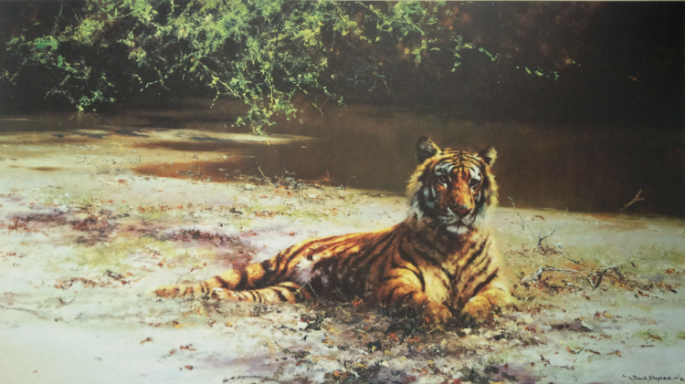 david shepherd  indian siesta print