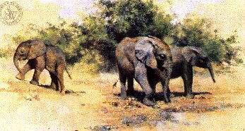 david shepherd kilaguni babies signed limited edition print