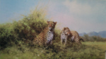 davidshepherd-Leopards