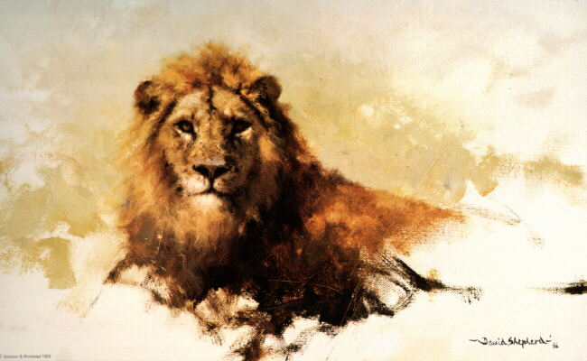 davidshepherd lion sketch 1986
