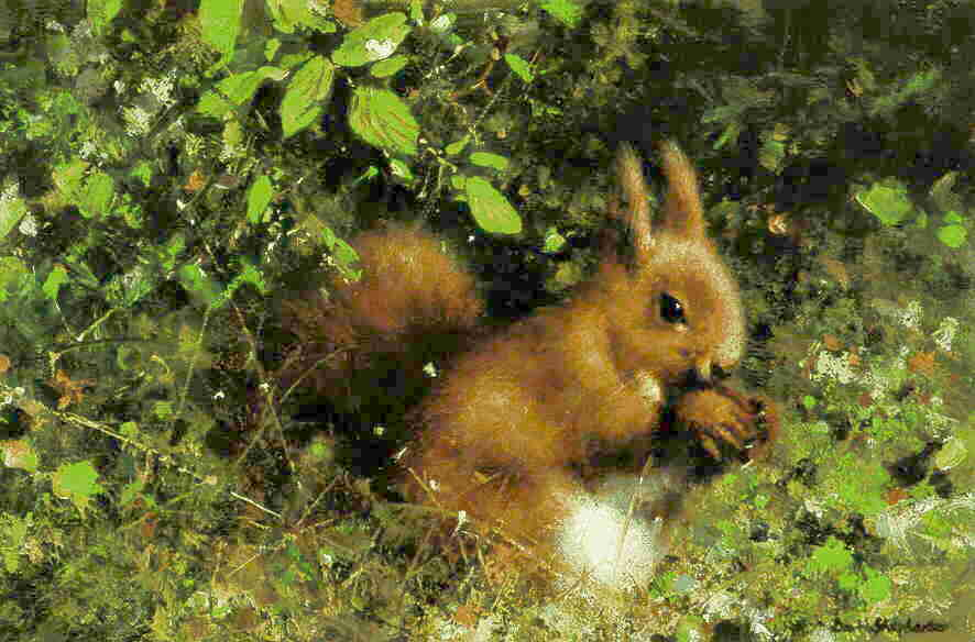 davidshepherd nuts, red squirrel