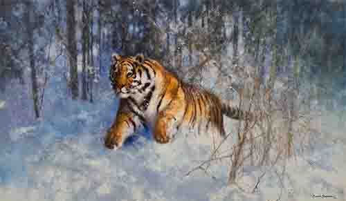 davidshepherd-tigerinthesnow