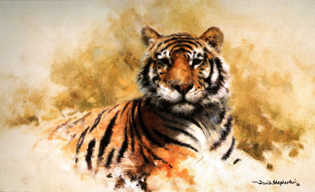 davidshepherd tiger sketch 1987