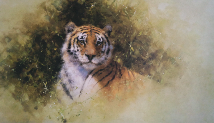 davidshepherd working sketch for the painting of a tiger