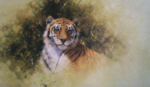 david shepherd sketch painting tiger