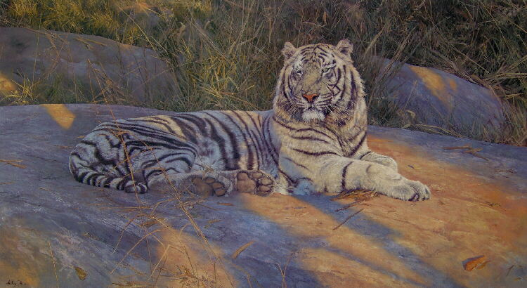 anthony gibbs great white tiger signed print
